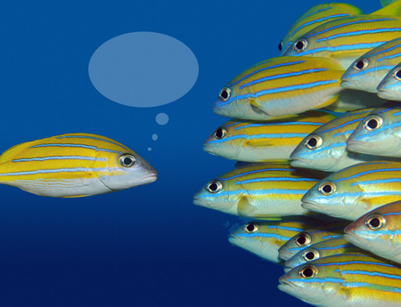 school of fish sharing knowledge by Columbus website designer and SEO firm